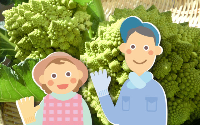 「カリブロ」「ロマネスコ」を育てるなら。プロが教える正しい栽培方法はこれ!