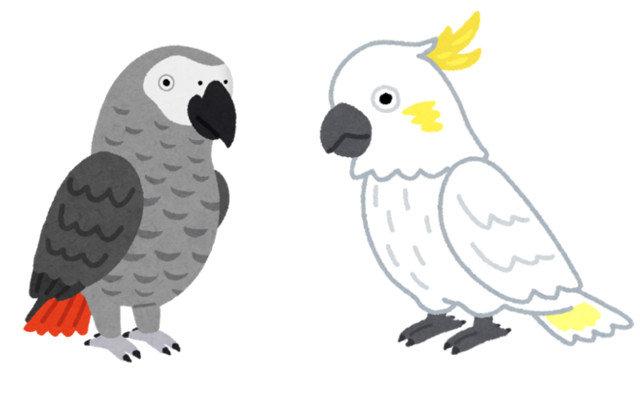 オウムとヨウムの違いは何?飼いやすいのはどちら?
