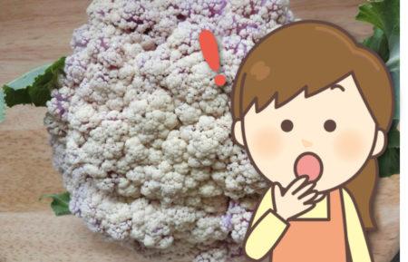 カリフラワーの花や茎が紫色に変色!これはなぜ?食べても大丈夫?