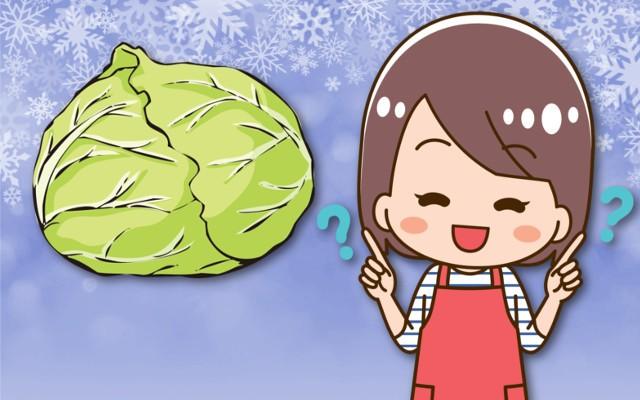 冬キャベツと春キャベツの違いは何?栄養の違いはあるの?
