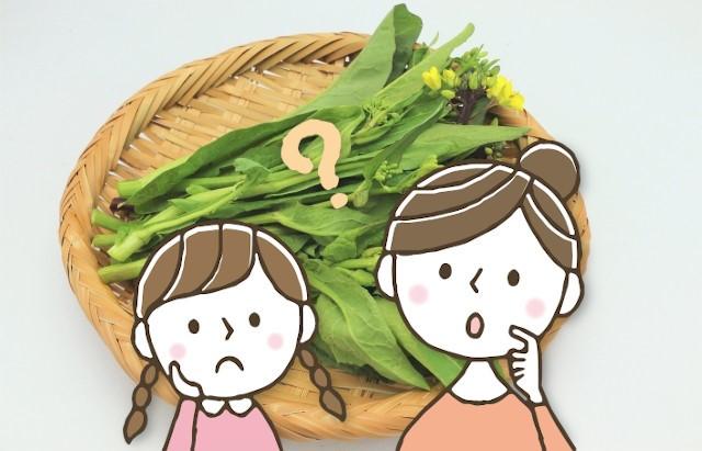 「菜花」「菜の花」「つみ菜」に「かき菜」違いは?