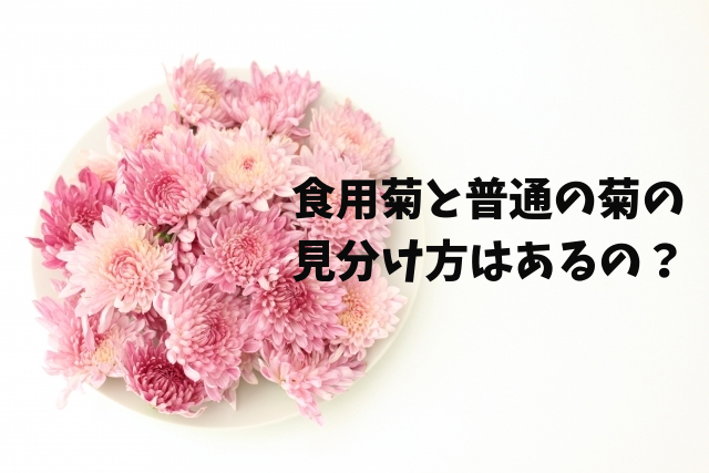 食用菊と普通の菊の見分け方はあるの?
