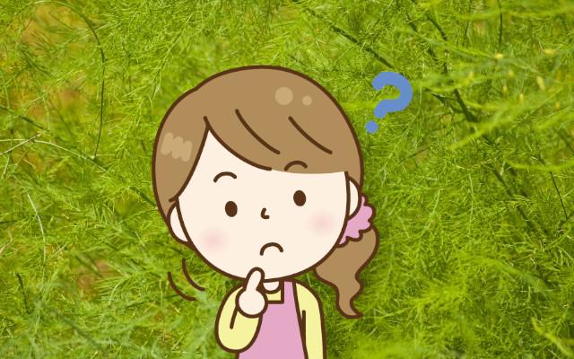 アスパラガスの擬葉は取ったほうが良いの?食べられるの?