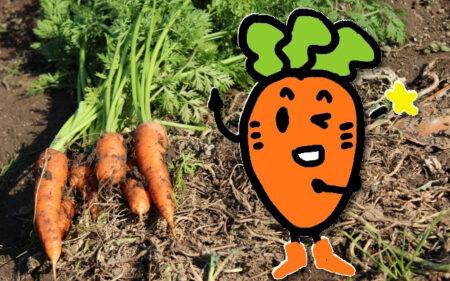 家庭菜園で穫れた人参をなるべく長期保存したい。良い方法を教えて!