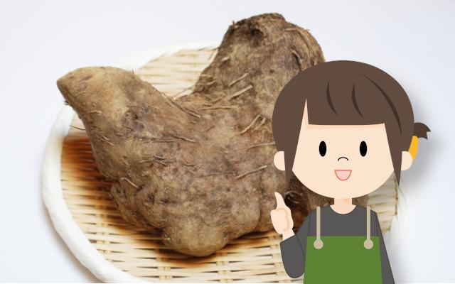 つくね芋(大和芋)の種芋を保存するには?収穫した後の保存方法を教えて!