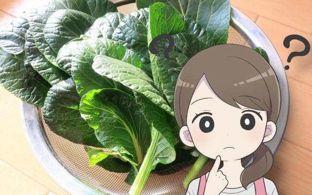 小松菜って、下茹でやあく抜きは必要?生で食べても大丈夫?